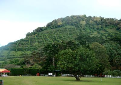 400 Асьенда Портесуэло с обширными кофейными плантациями